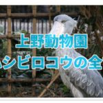 上野動物園でハシビロコウはグッズ人気2位!パンダを勝る魅力とは