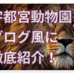 宇都宮動物園をブログ風に徹底紹介!遊園地とプールは穴場!?