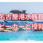 名古屋港水族館でベビーカーは使える??授乳室など徹底調査