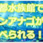 京都水族館でチンアナゴが何と食べられる!?いろんなチンアナゴ