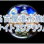 名古屋港水族館のナイトと言えばアクアリウム!混雑時の対処法