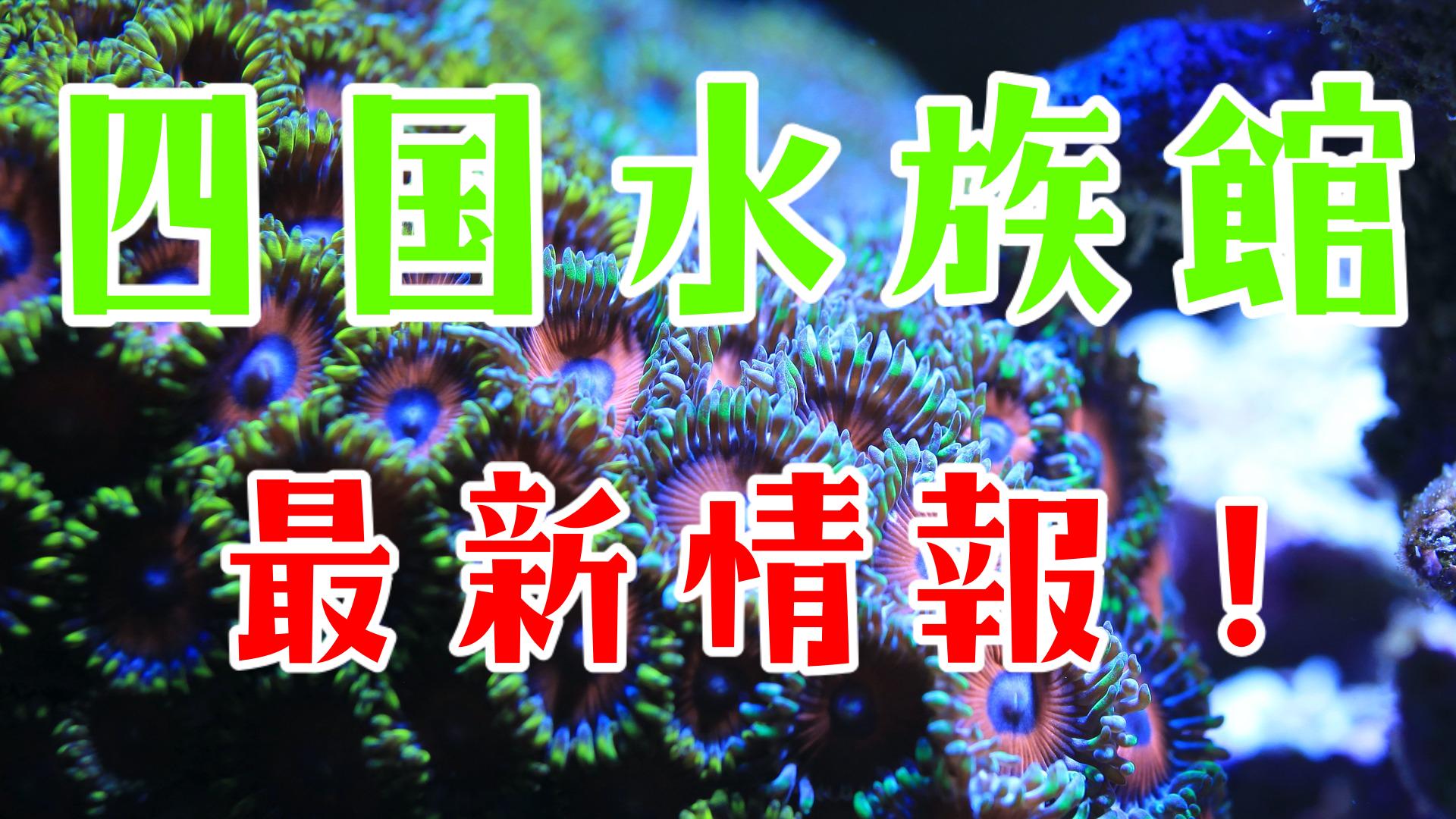 水族館 四国 最大