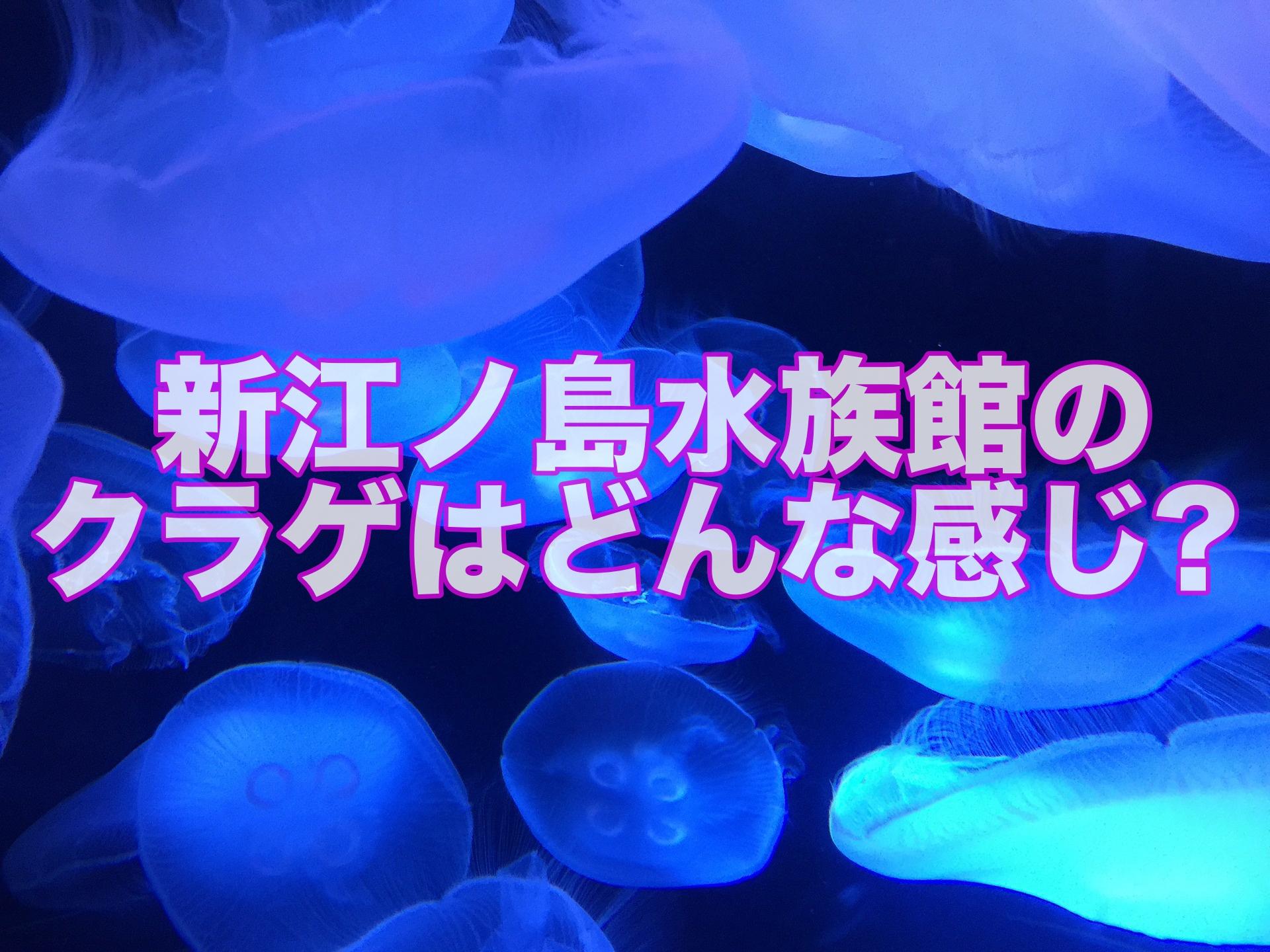江ノ島 水族館 新